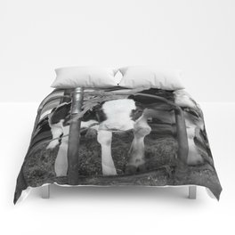 Baby Cow and Mother Comforters