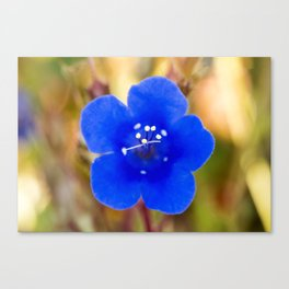 Desert Bluebell Alternate Perspective Canvas Print