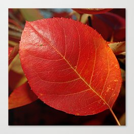 Autumn coppery red Juneberry berry leaf Canvas Print