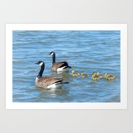 Family of Canadian Geese swimming Art Print