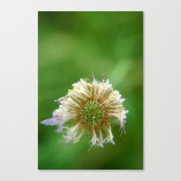 Whisked Away Canvas Print