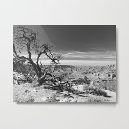 Desert View Tree Metal Print