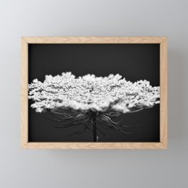Her Majesty // Queen Anne's Lace Framed Mini Art Print
