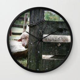 Adorable Sheep Peeking Out From Behind Fence Wall Clock