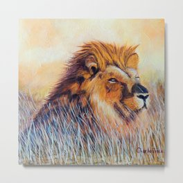 Lion sun bathing | Bain de soleil Lion Metal Print
