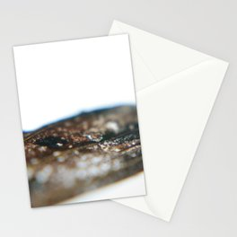 Macro // Butterfly wing II Stationery Cards