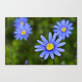 Blue Flower, Yellow Heart Canvas Print