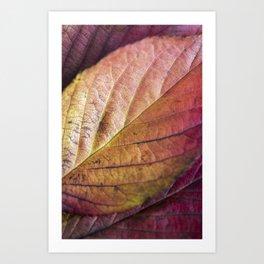 Autumn Colours II Art Print