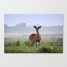 Misty Buck Canvas Print