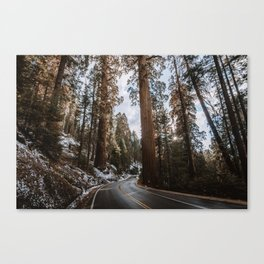 Giant Forest Exploring Canvas Print