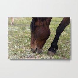 A Beautiful Horse's Face Metal Print