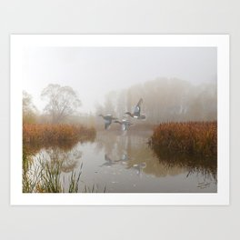 Cinnamon Teal Ducks in the Mist Art Print