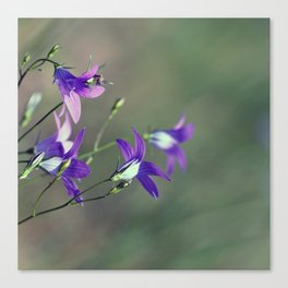 BlueBell Flower Nature Photography  Canvas Print