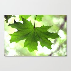 Acer Leave  4356 Canvas Print
