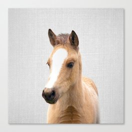 Baby Horse - Colorful Canvas Print