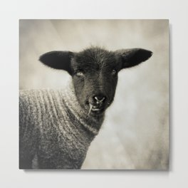 YOUNG LAMB - OLD FRIENDS COLLECTION Metal Print