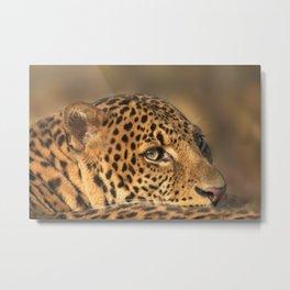 Face Of A Leopard Metal Print