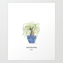 Pony Tail Plant Art Print
