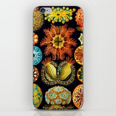 Sea Squirts (Ascidiacea) by Ernst Haeckel iPhone & iPod Skin