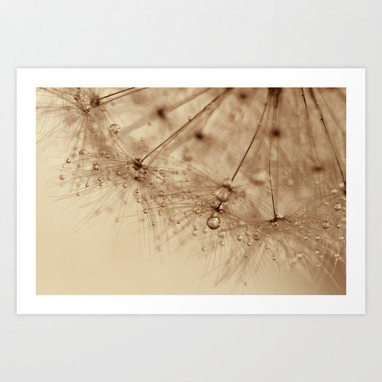 droplets of gold - dandelion Art Print