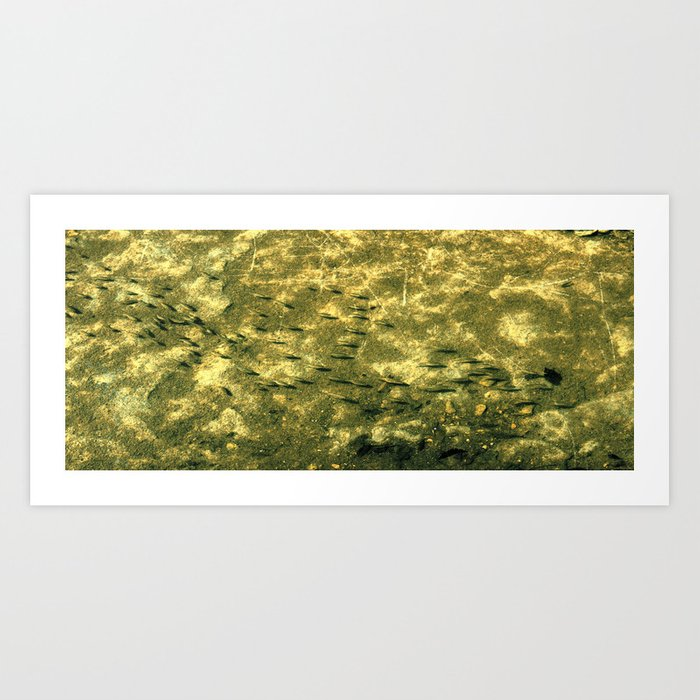 """Fish Wall"" Art Print"