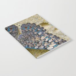 Turquoise and Sand Butterfly by Teresa Thompson Notebook