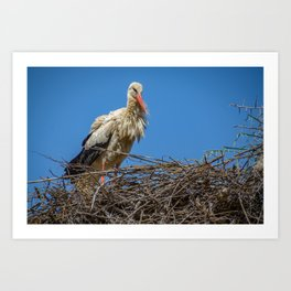 Nesting Stork  in Rabat Art Print