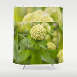 Viburnum opulus Roseum inflorescence Shower Curtain