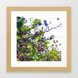 Ojai, California: Late Spring Framed Art Print