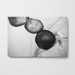 Jellyfish Black and White Metal Print