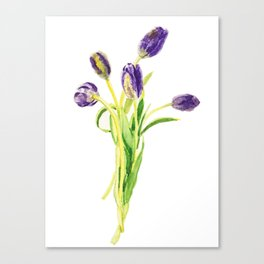purple tulip Canvas Print