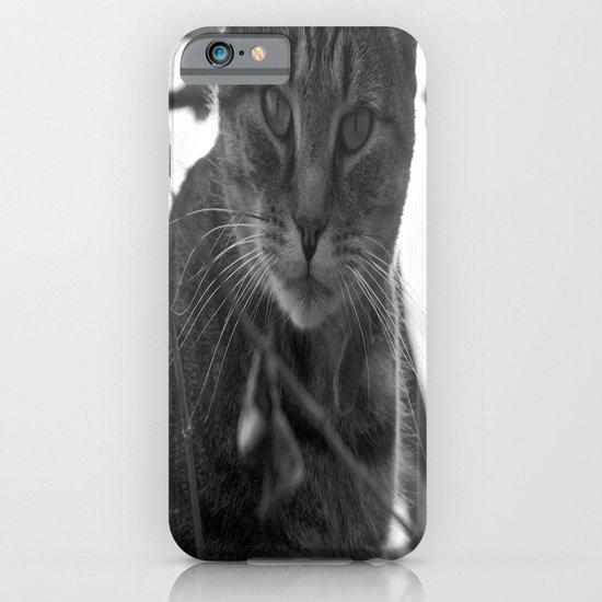 Winter Stare iPhone & iPod Case