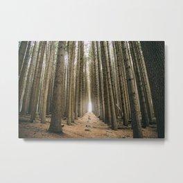 Sugar Pine Walk Metal Print
