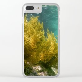 Forest of Seaweed, Seaweed Underwater, Seaweed Shallow Water near surface Clear iPhone Case