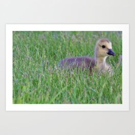Gorgeous Gosling by Reay of Light Art Print
