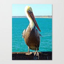 Portrait of a Perky Pelican Canvas Print