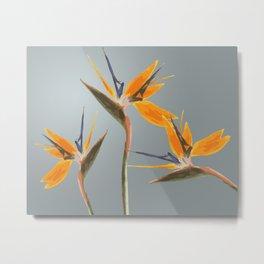 Strelizia - Bird of Paradise Flowers Metal Print