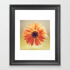 Orange Daisy Framed Art Print