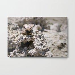 moth on tufa Metal Print
