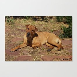 """Born Free"" from the photo series, ""My dog, PLaY-DoH"" Canvas Print"