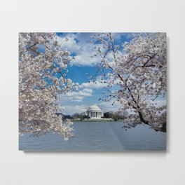 Thomas Jefferson Memorial with Cherry Blossoms  Metal Print