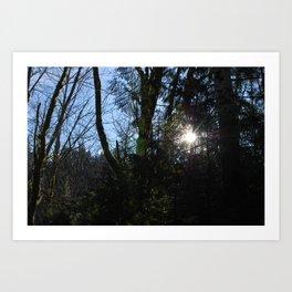 Forest Sunshine Again Art Print