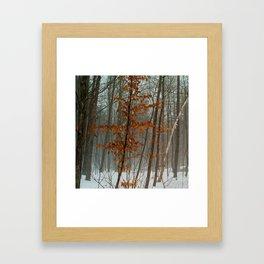 Ottawa, Winter, 2013 Framed Art Print
