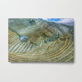 Rice Field Landscape Metal Print