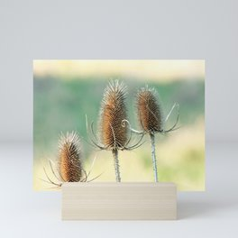 Look out - prickly plant ! Mini Art Print