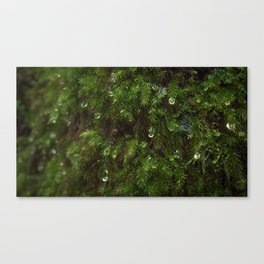 THE MOSSES OF LIFE Canvas Print