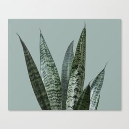 Snake plant in green Canvas Print