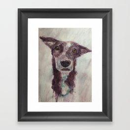 Parson, the cattle dog Framed Art Print