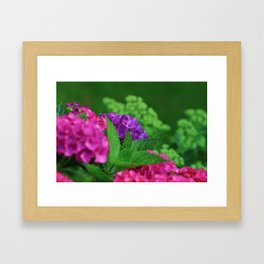 Vibrant and Colorful Pink Magenta and Purple Hydrangea Hortensia Flower Framed Art Print