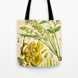 Vintage Scientific Botanical Illustration Tree Nuts Green Leaves Trees Himalayan Plants Tote Bag